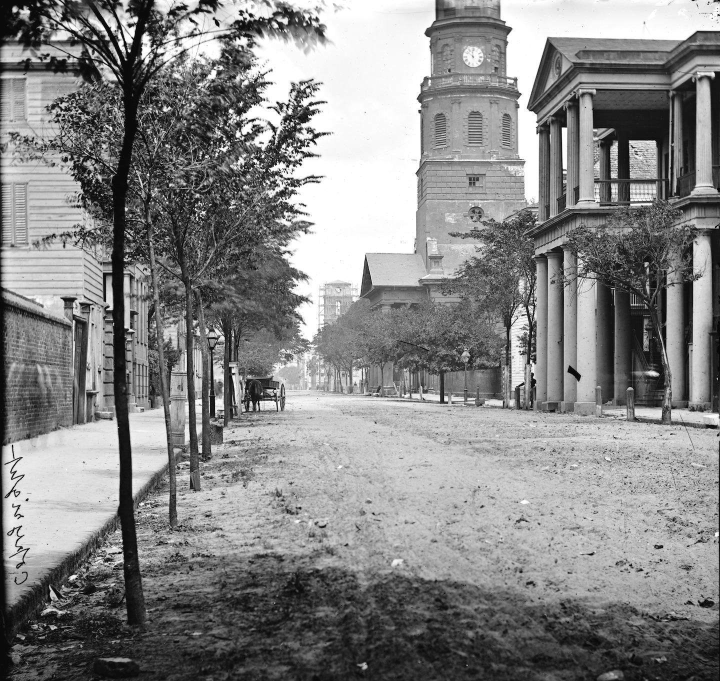 The Destruction and Renewal of Charleston's Street Trees, 1837–1865