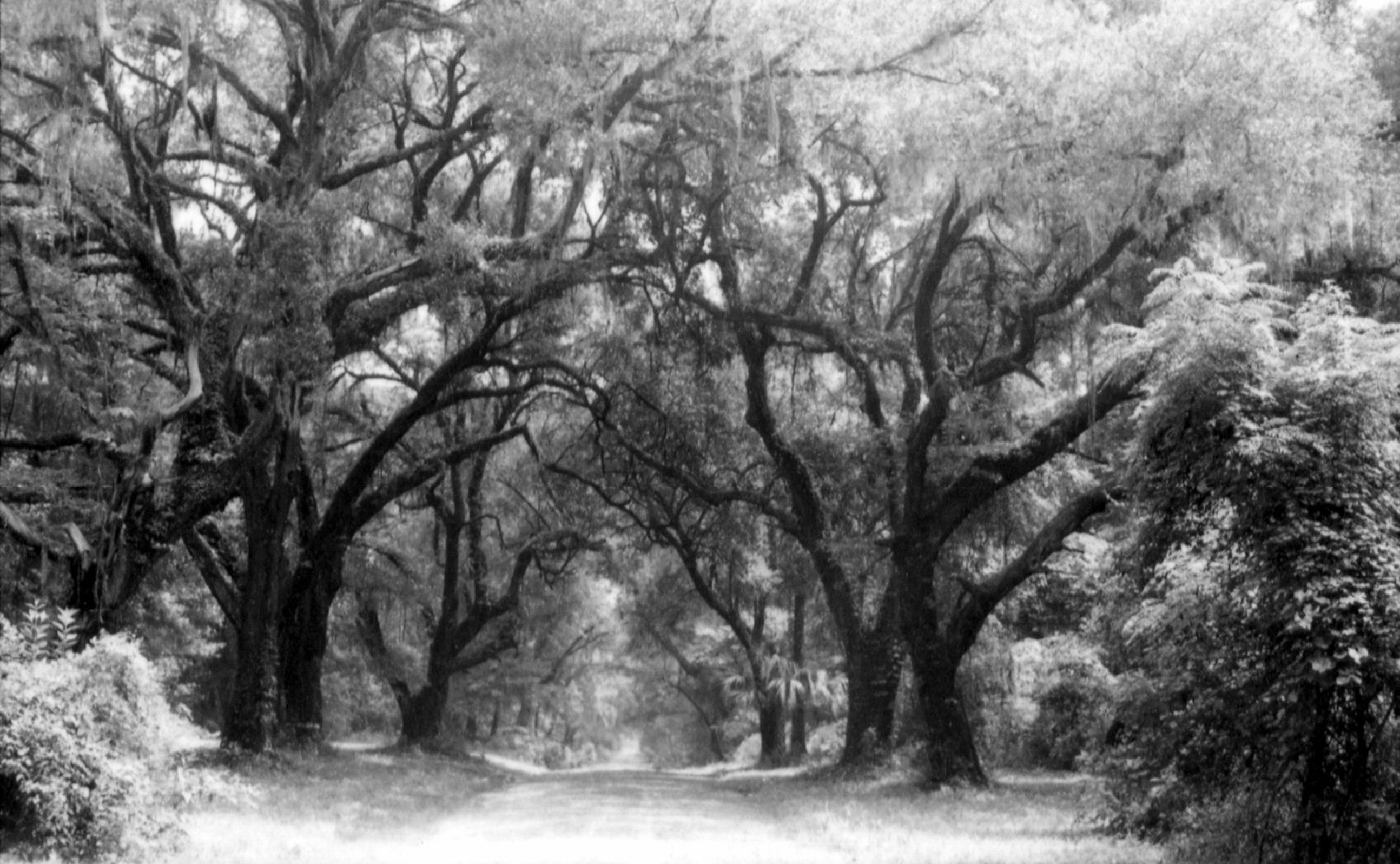 The Shady History of Protecting Lowcountry Trees