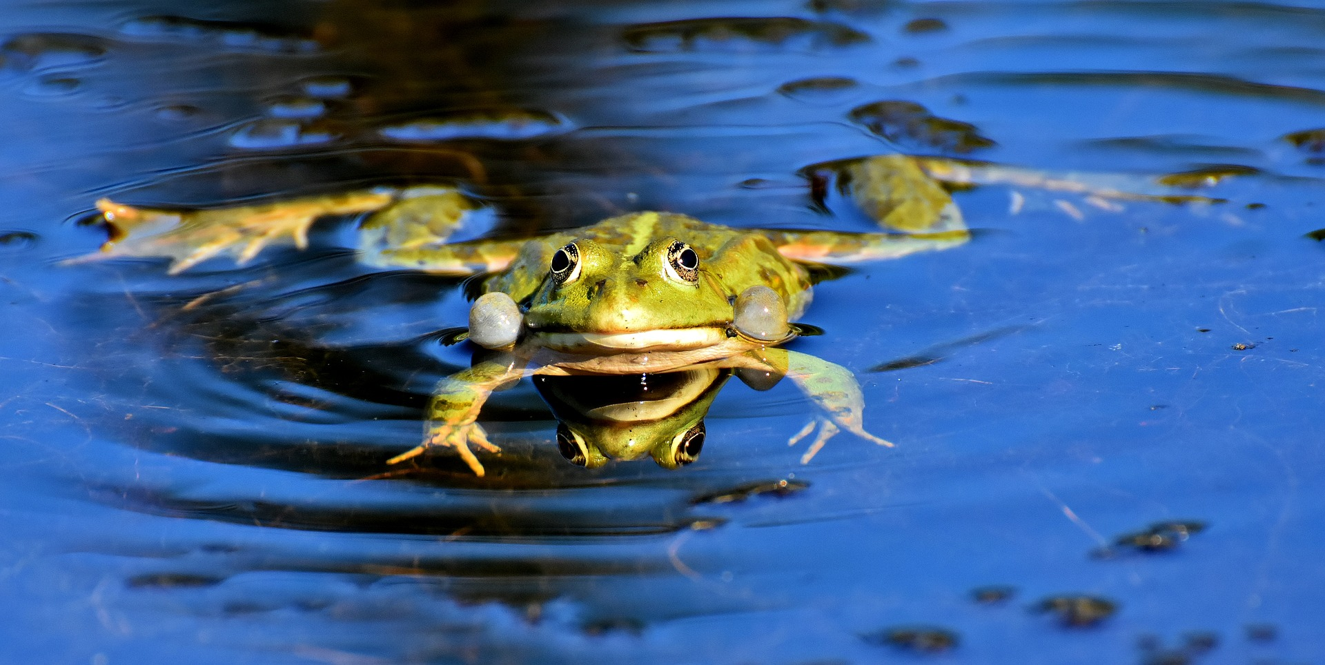 I Dont Want to Be a Frog