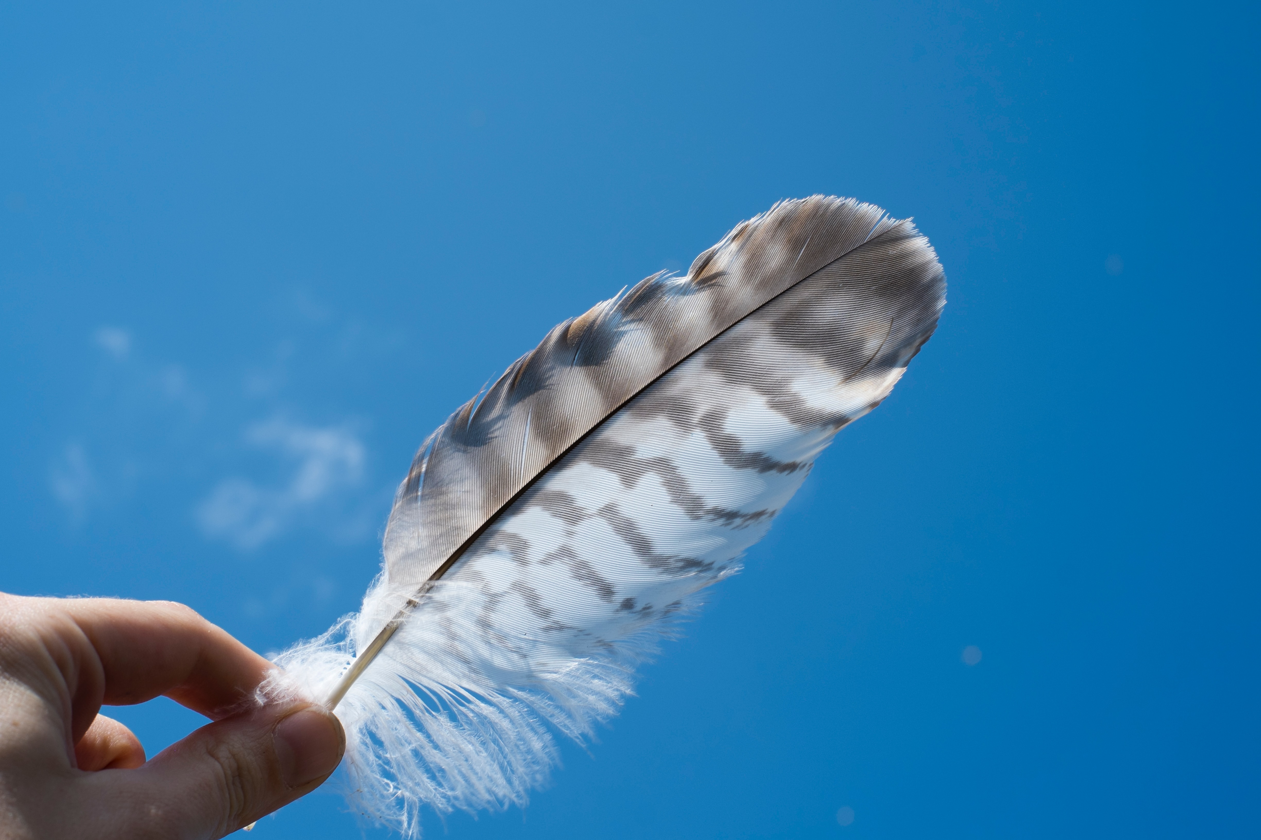 Feather keychain craft SEWE
