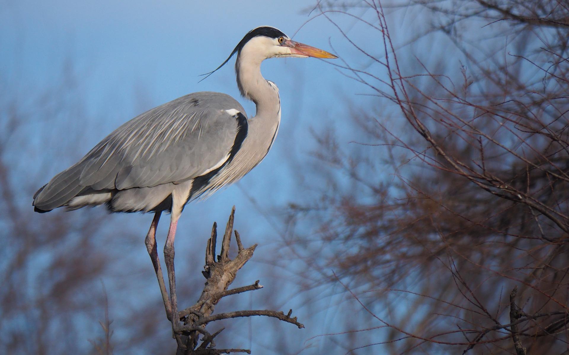 Heron art photography students Angel Oak