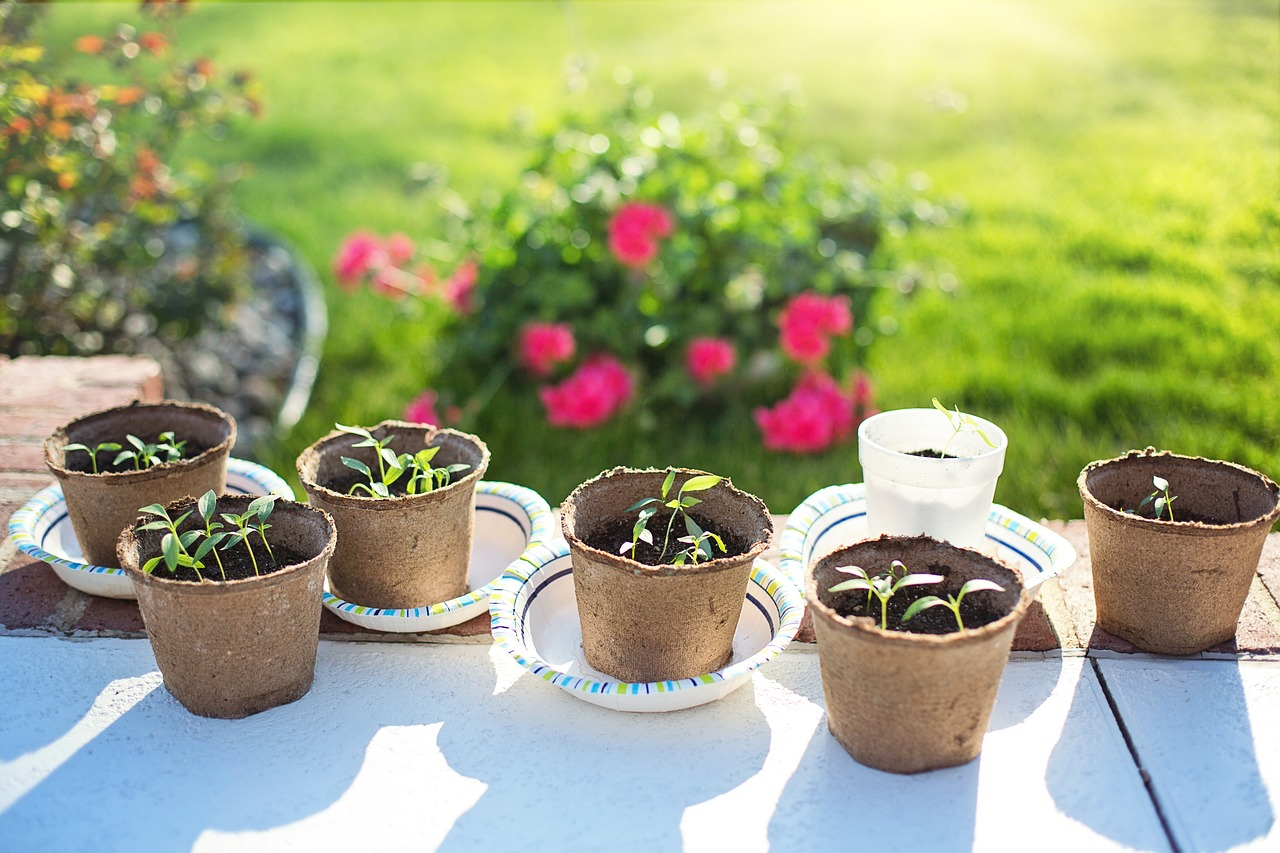 Seedlings - gardening - green thumb