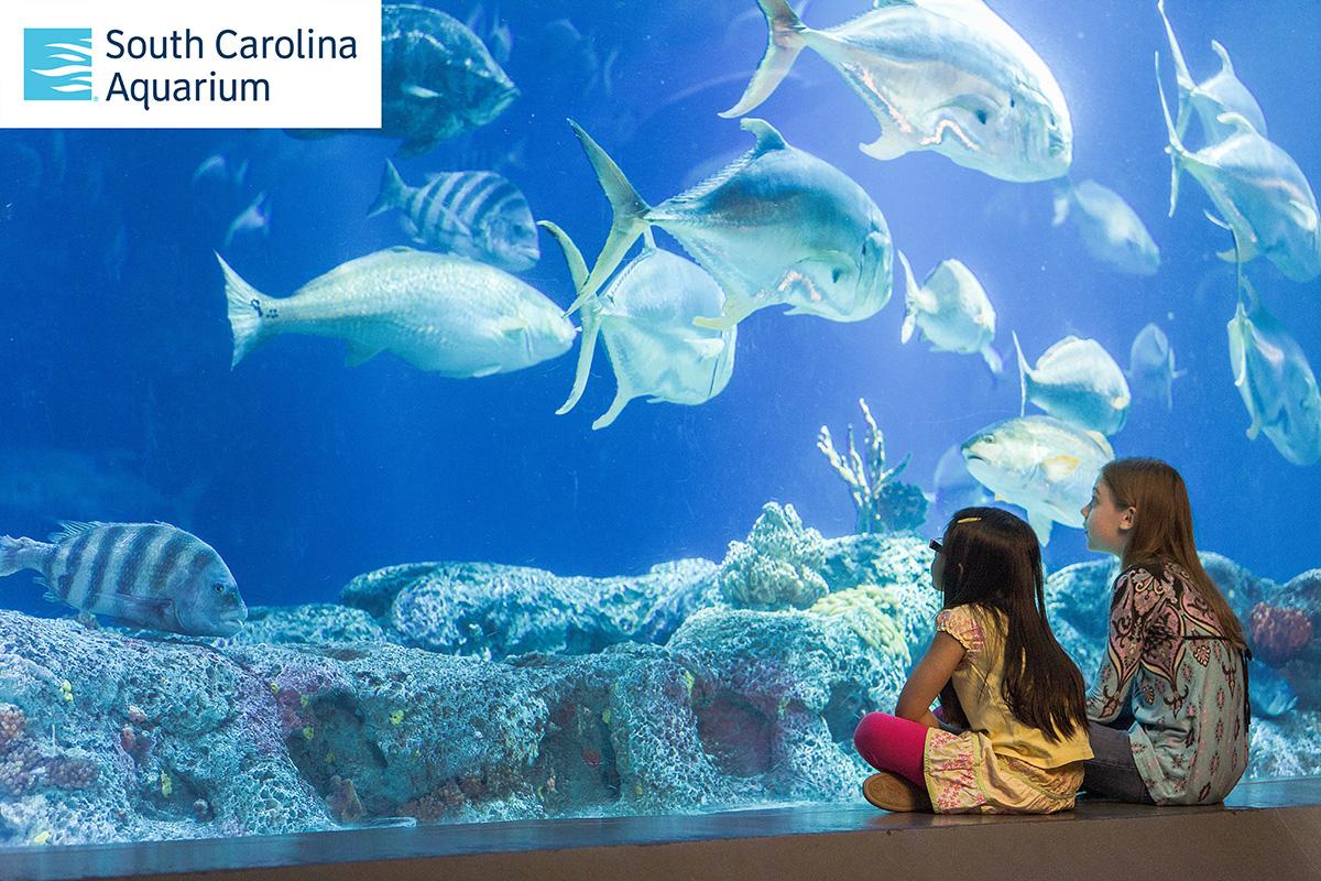CCPL, South Carolina Aquarium team up to make memberships available for checkout