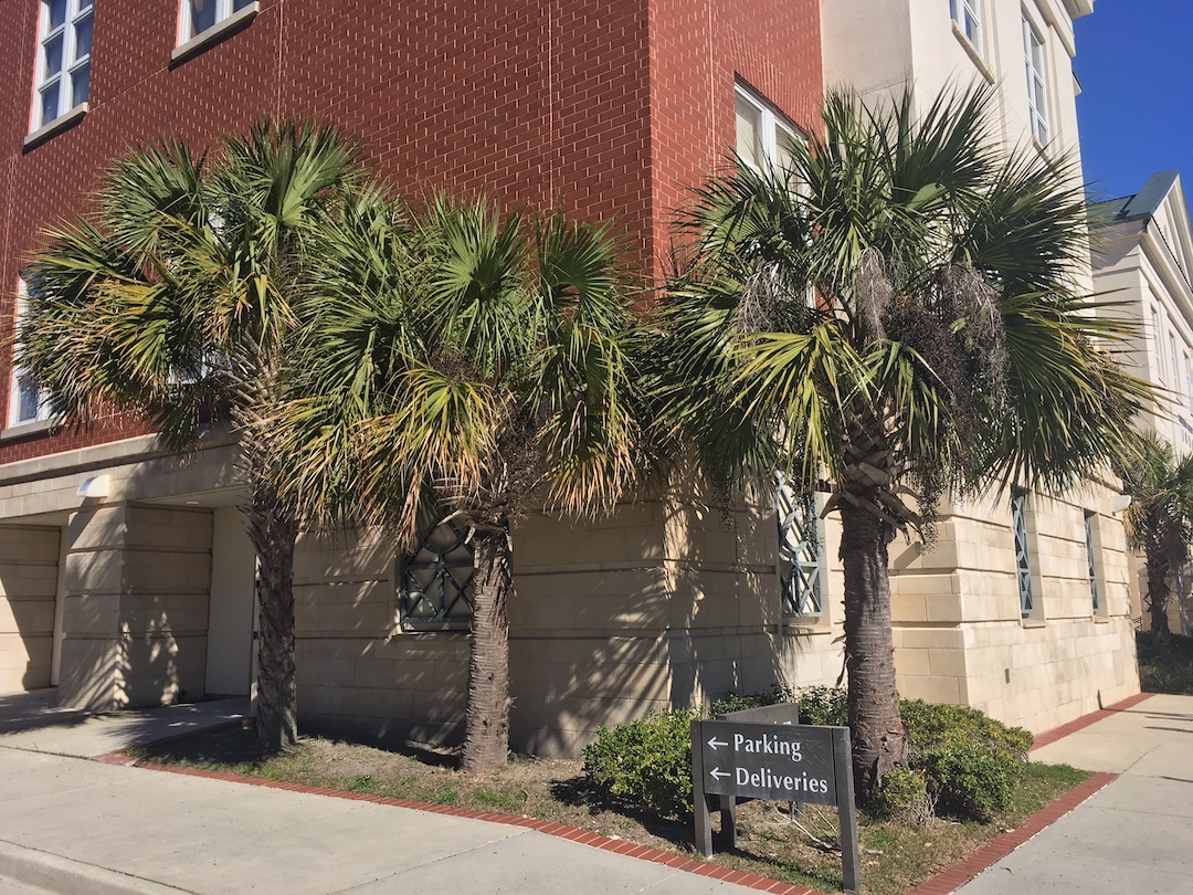 Palmettos outside the Main Branch of the Charleston County Public Library.