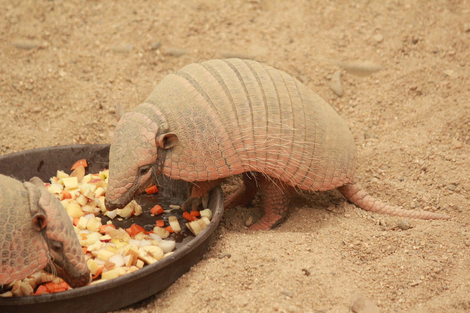 Five downloadable books about armadillos to read after your virtual zoo trip