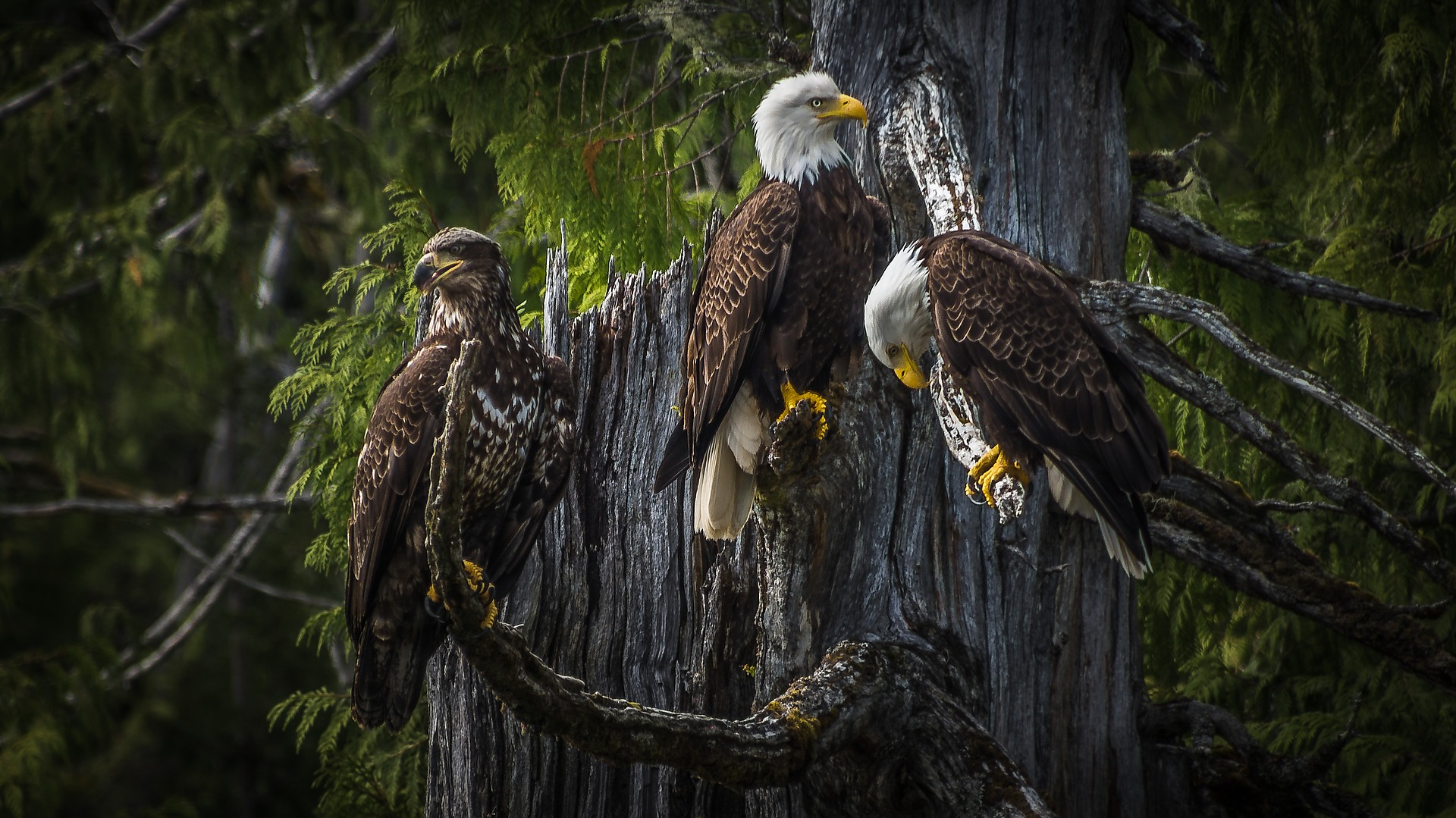 Let your knowledge of eagles fly high with these ebook recommendations