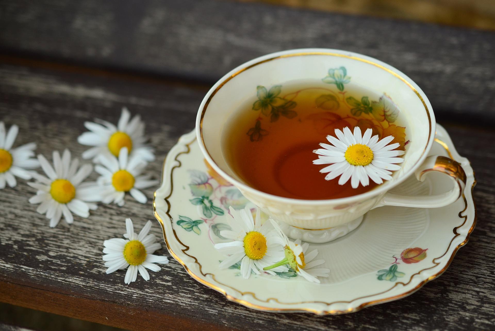 Tea Dragon Society Series Book Talk