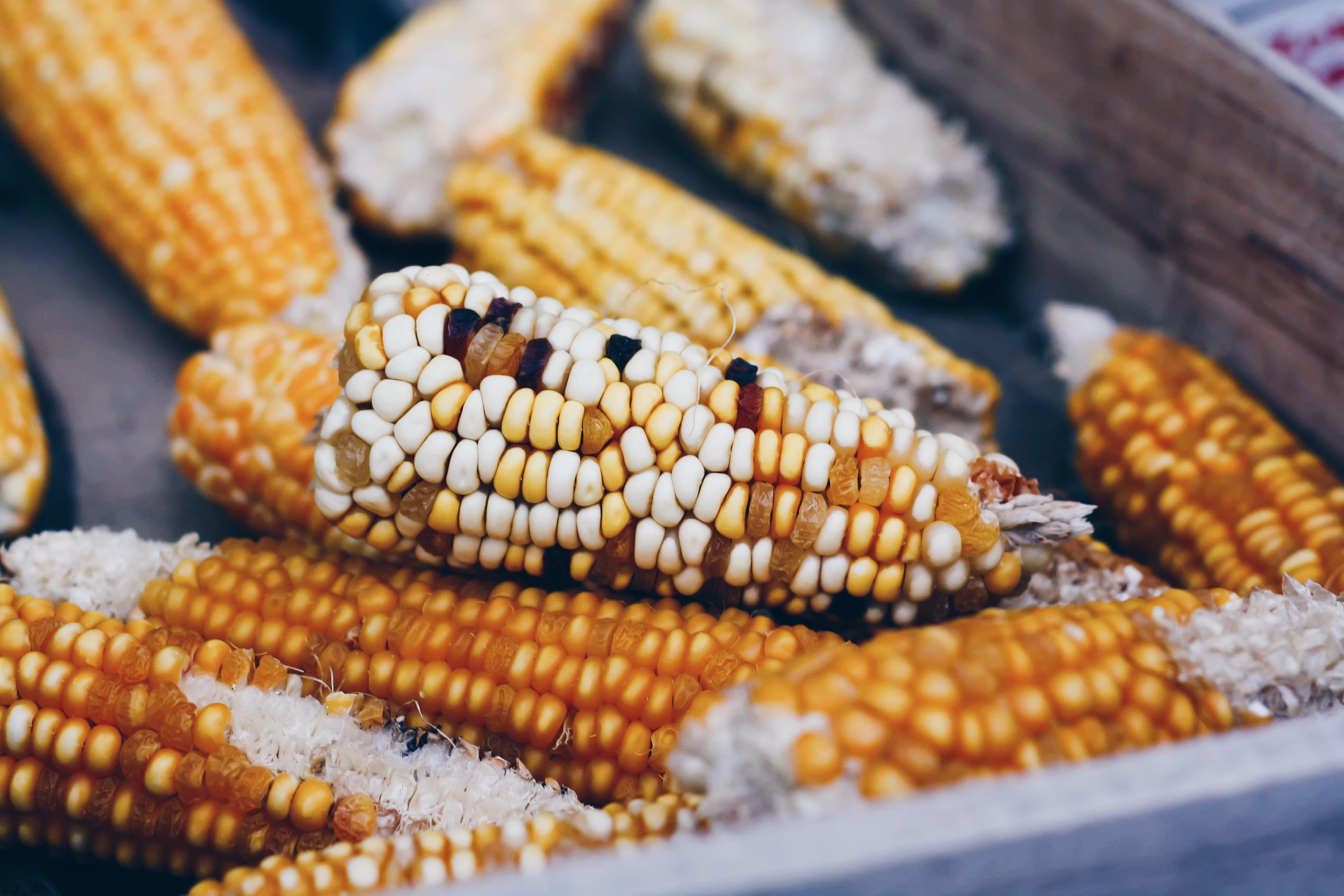 Seasonal STEAM: Dancing Corn