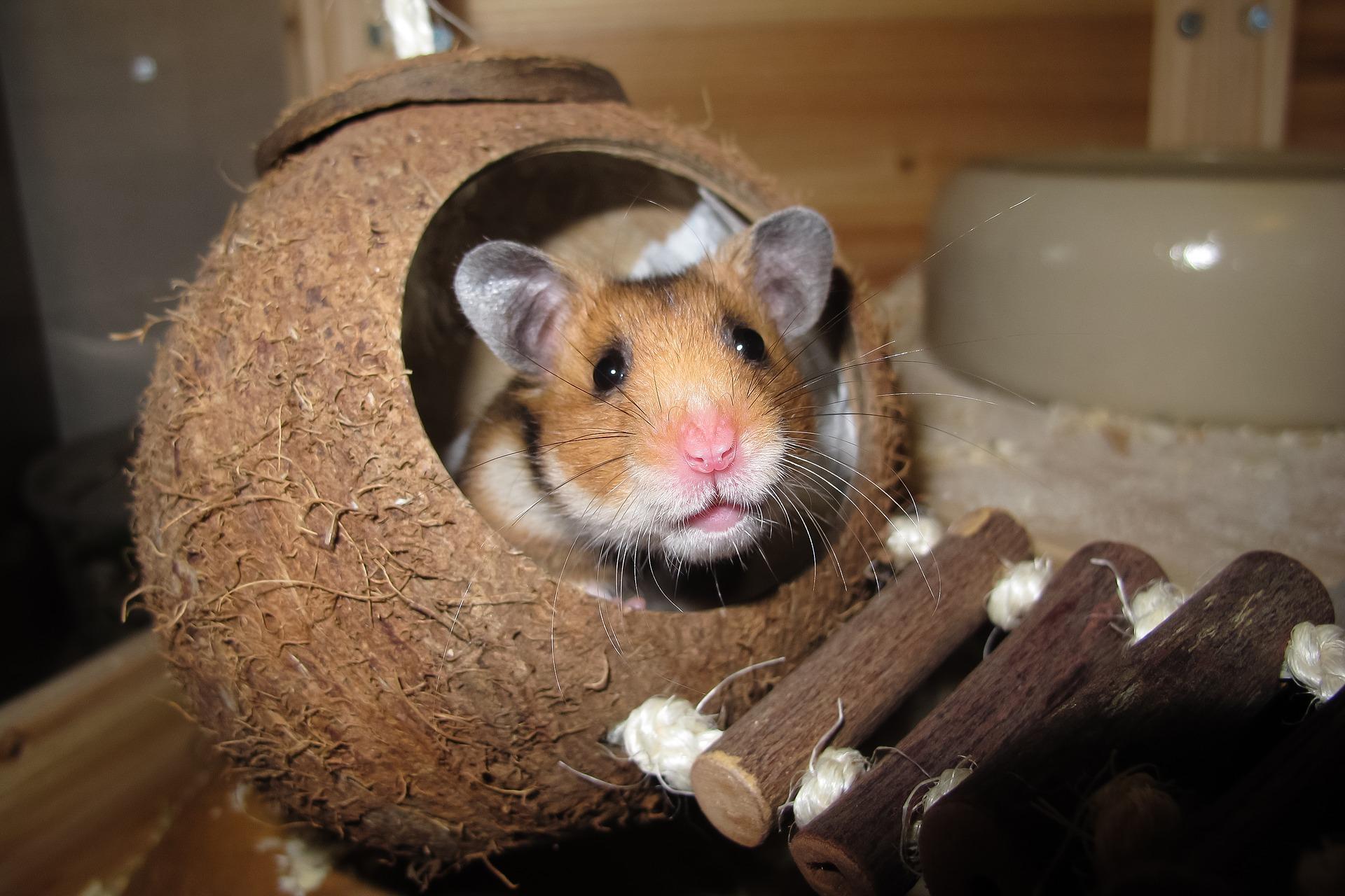 Pets 101: Hamsters