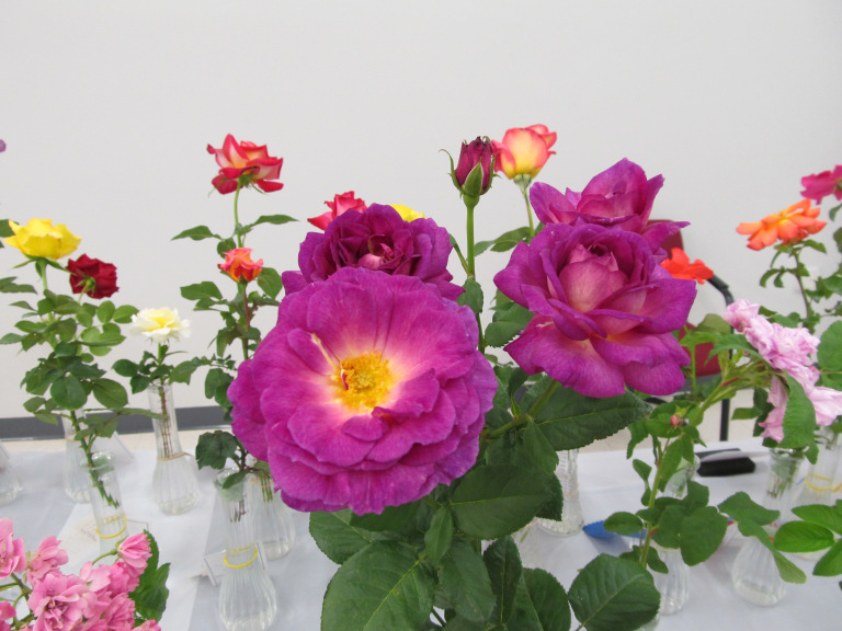 ae69022046bc Charleston Lowcountry Rose Society Display